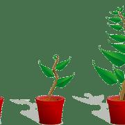 Maturidade na gestão de negócios de pequenas e médias empresas